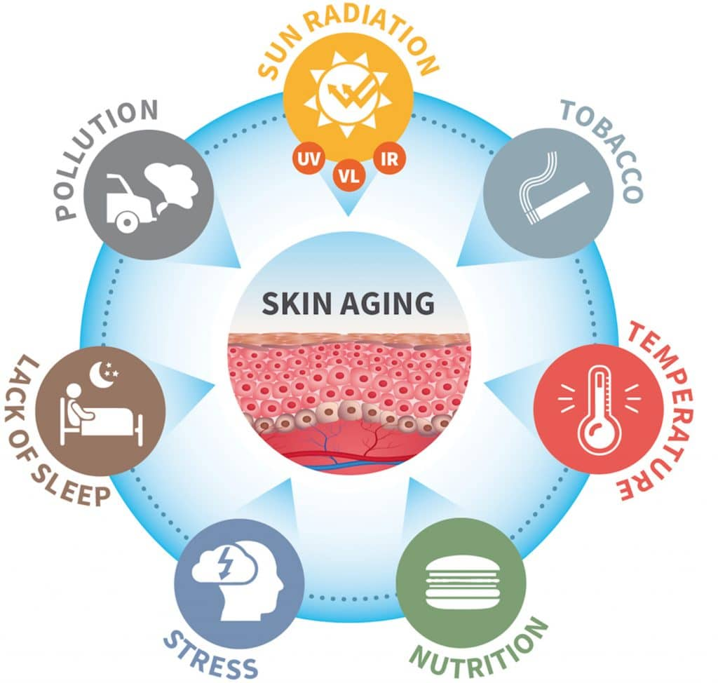 exposome of skin aging and damage due to free radicals